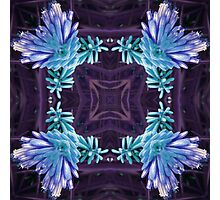 Blue Hot Pokers Photographic Print