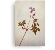 Herb Robert Canvas Print