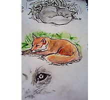 Mrs Fox takes a well earned rest! Photographic Print