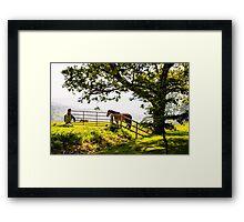 Horse under a big tree Framed Print