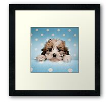 Cute puppy peeking from blue spotted background Framed Print