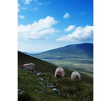 3 Sheeps To The Wind Photographic Print