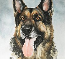 German Shepherd by BarbBarcikKeith