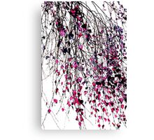 pink willow Canvas Print
