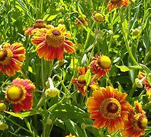 daisies 2 by Tatyana Penkova