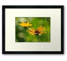 Golden Sunned Flowers Framed Print
