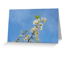 Apple blooming with blue sky Greeting Card