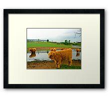 Hielan Coo Fold Framed Print
