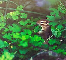 Squirrel in loving nature by Shahnewaz