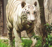 The White Tiger Sticker