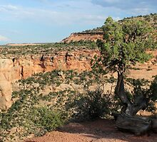 Tree 3 Colorado National Monument by marybedy
