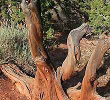 Tree 4 Colorado National Monument by marybedy
