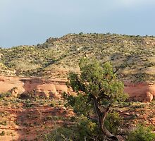 Tree Colorado National Monument by marybedy