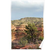Tree Colorado National Monument Poster