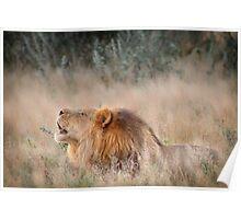 Roar of the Kalahari Poster