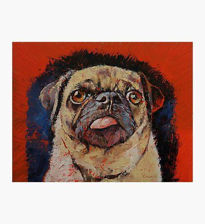 Pug Portrait Photographic Print