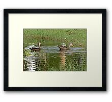 ducks n dragons Framed Print