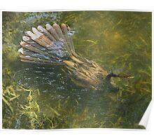 Water Turkey Poster