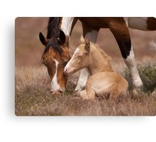 Born To Be Wild Canvas Print