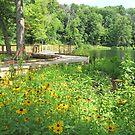 Lily Pond by Jack Ryan