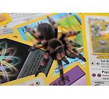 Brachypelma Smithi on Pokemon Photographic Print