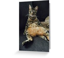 Portrait of a Distinguished Cat Greeting Card