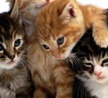 Little Kittens Sticker