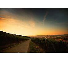Würzburg Vineyard Photographic Print