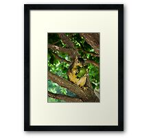 Sunflower thief Framed Print