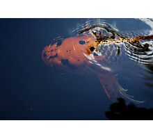 A Koi Fish For Luck Photographic Print