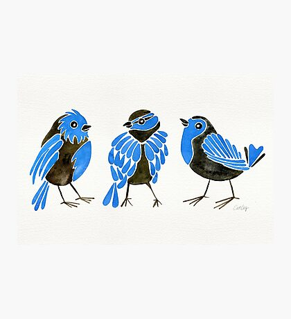 Blue Finches Photographic Print