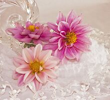 Three Pink Dahlias by Sandra Foster