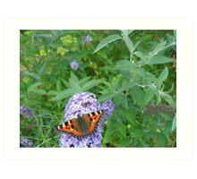 Tortoise shell butterfly Art Print