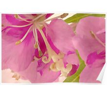 Fireweed Macro Digital Watercolor Poster