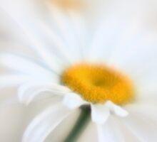 White Sunday by leapdaybride