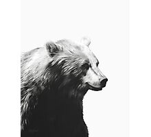 Bear // Calm Sketch Photographic Print