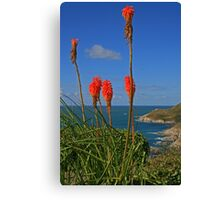 North Devon Coast Canvas Print