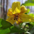 Shy Flower by vigor