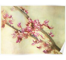 Fractalius Blossoms Poster