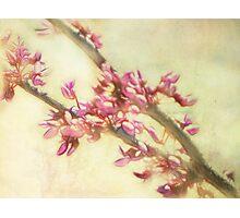 Fractalius Blossoms Photographic Print
