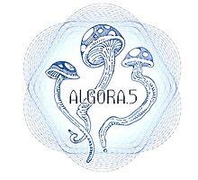 AlgoraFive.02 by Streedy