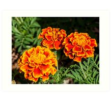 Three Marigolds Art Print