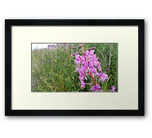Pink Flower Stalk Framed Print