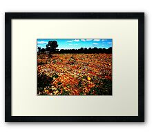 Orange Acres Framed Print