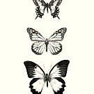 Butterflies // Align by Amy Hamilton