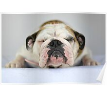 Molly - Bulldog Cheese Poster