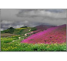 Clouds Over a Purple Field Photographic Print