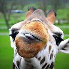 You're Having a Giraffe? by Hazel Dean