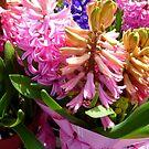 Hyacinths by WildestArt
