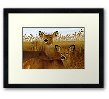 Deer Side by Side Framed Print